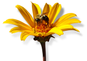 NECTAR Flower and Bee Photographic Logo